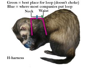 H-harness